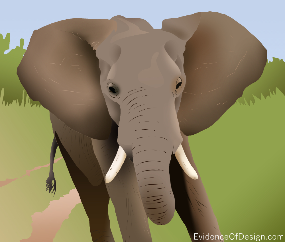 Just HOW DO the elephant's ears keep it cool? Find out now by clicking the picture! #evidence #evidenceofdesign #elephant #elephantear #elephantsears #animal #nature