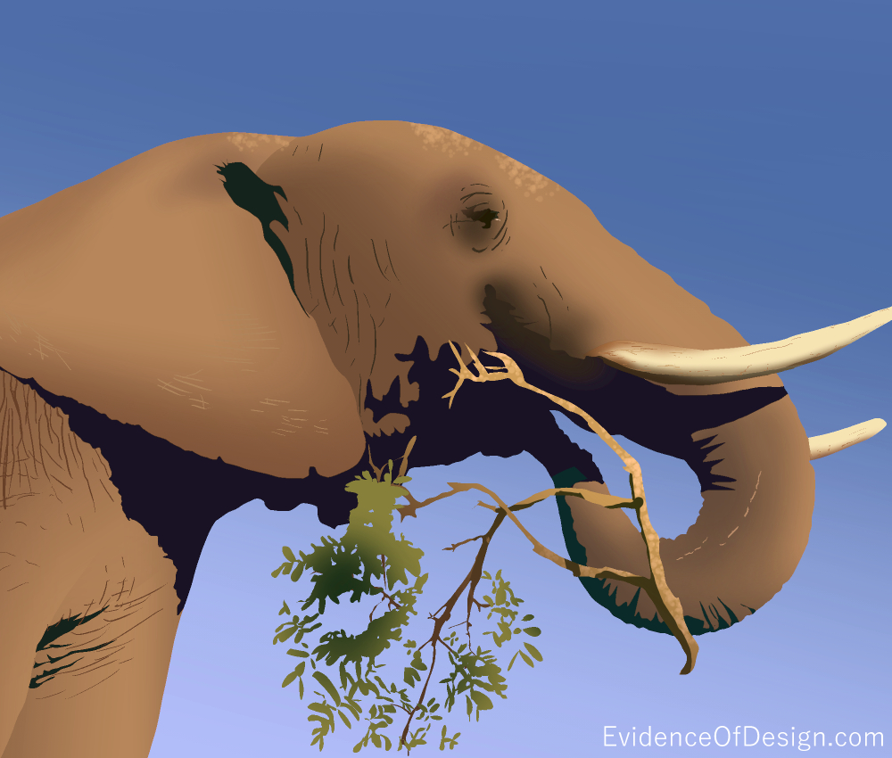 You won't BELIEVE how many muscles an elephant trunk has! Find out by clicking on the image above. #elephant #nature #evidenceofdesign #evidence