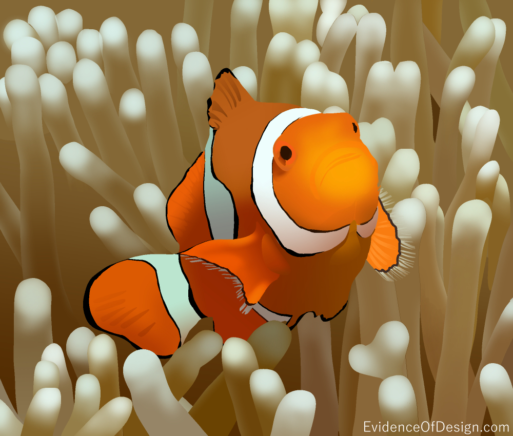 The golden rule isn't JUST for people. Find out how mutualism betters two creatures in today's article. #evidenceofdesign #creation #evidence #clownfish #intelligentdesign #mutualism #animals