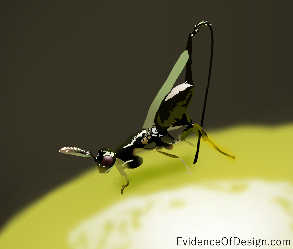 And you thought YOU had it difficult. Well, you haven't met the Evotutionary life of a fig wasp. Check it out by clicking the picture above! #figwasp #science #evidence #evidinceofdesign #nature #creation #creationevidence