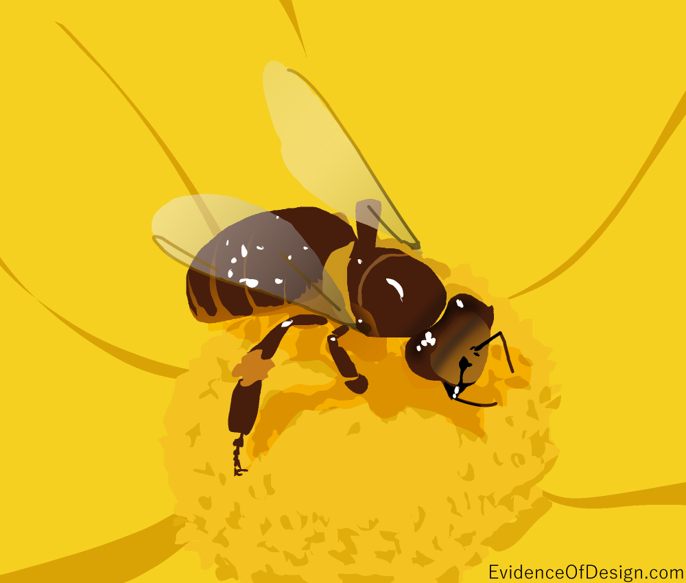 Does Evolution really have a BIG PROBLEM with bees? Yup. The honey bee will show you as you read the newest article! #evidenceofdesign #creation #creationevidence #science #evolution #bee #honeybee #honeybees #pollination