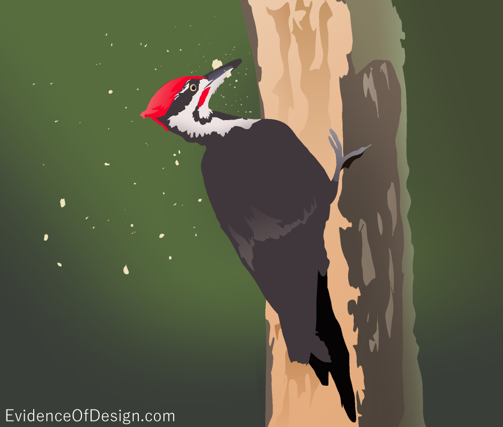 Why does the Woodpecker NOT have brain damage from all the tapping?! Find out by clicking the pic! #evidence #evidenceofdesign #woodpecker #woodpeckers #birds #nature